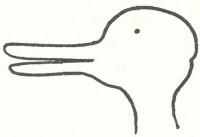 10_duckrabbitillusion2rt8.jpg